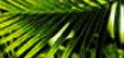 ירוק גונגל